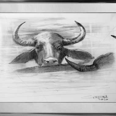 Thumbnail for Waterbuffel